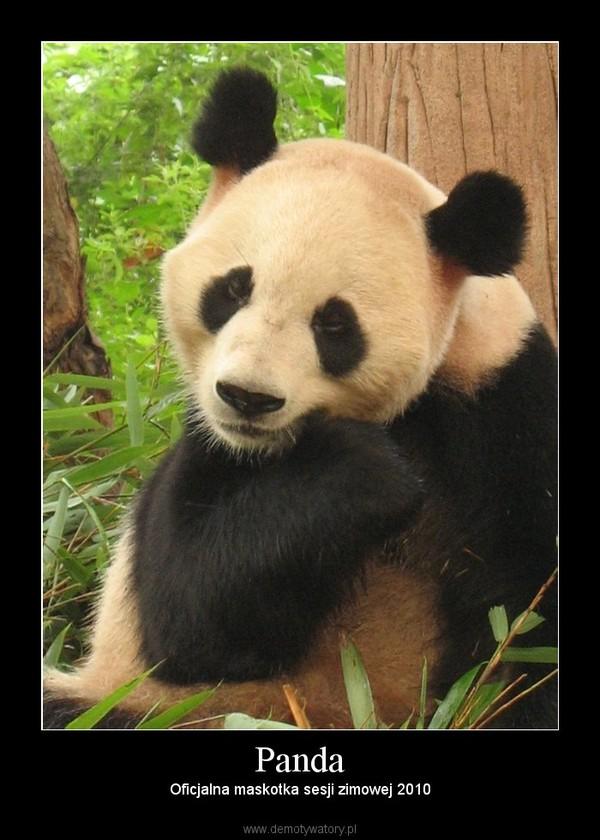 Panda – Oficjalna maskotka sesji zimowej 2010