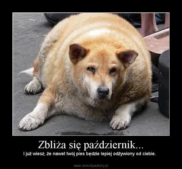 Zbliża się październik... – I już wiesz, że nawet twój pies będzie lepiej odżywiony od ciebie.