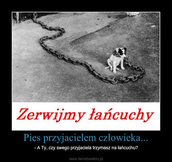 Pies przyjacielem człowieka... – - A Ty, czy swego przyjaciela trzymasz na łańcuchu?