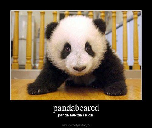 pandabeared