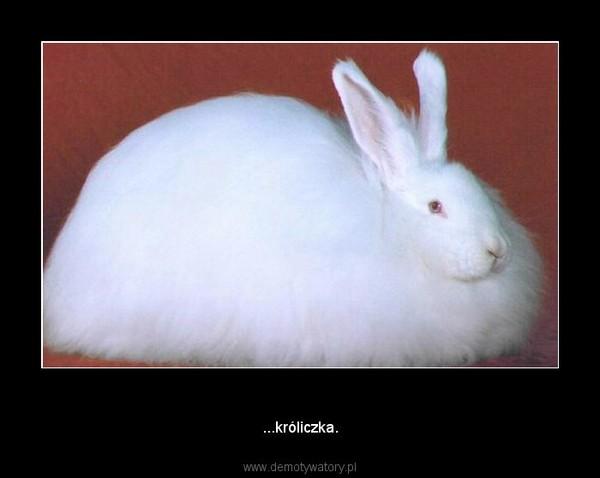 Bo jestem miniaturka... –  ...króliczka.