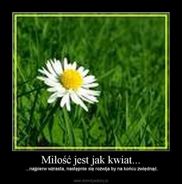 Miłość jest jak kwiat... – ...najpierw wzrasta, następnie się rozwija by na końcu zwiędnąć.