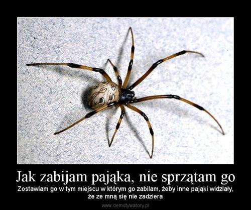 Jak zabijam pająka, nie sprzątam go