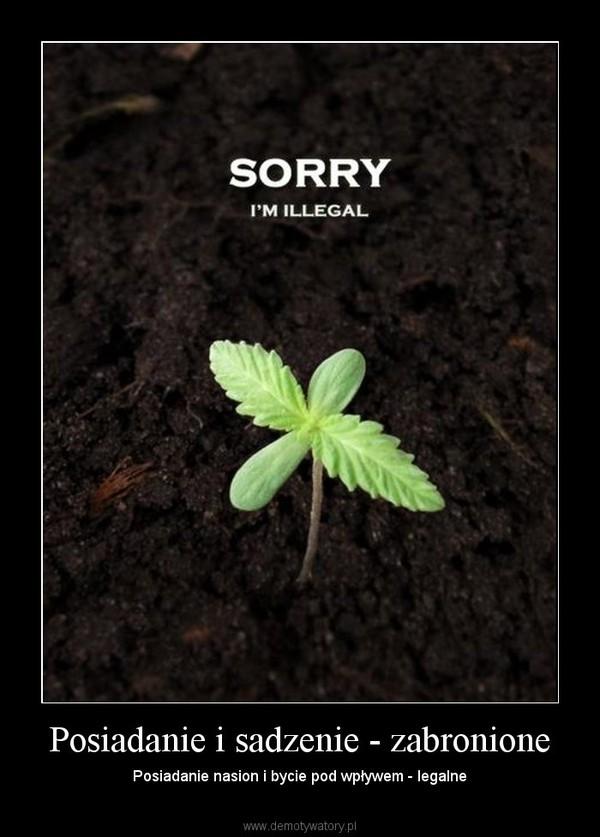Posiadanie i sadzenie - zabronione – Posiadanie nasion i bycie pod wpływem - legalne