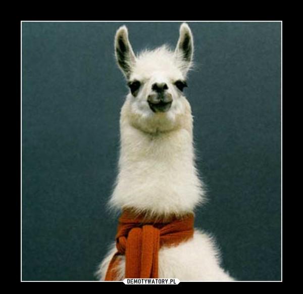 Lama – Wystarczy spojrzenie,a uśmiech sam się pojawia na twarzy