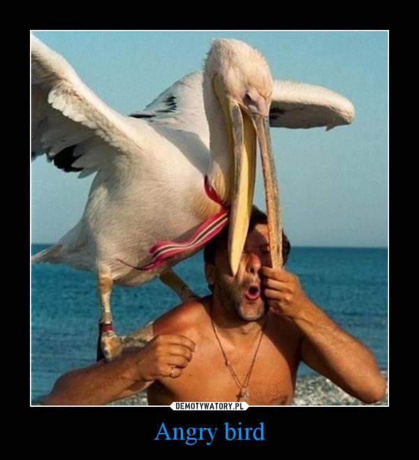 Angry bird –