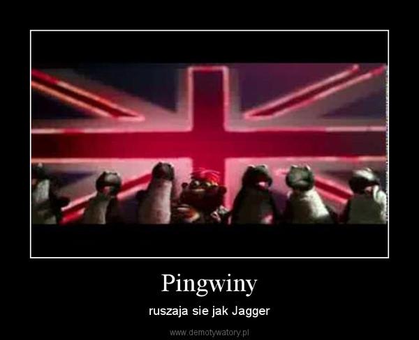 Pingwiny – ruszaja sie jak Jagger