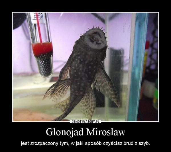 Glonojad Mirosław – jest zrozpaczony tym, w jaki sposób czyścisz brud z szyb.