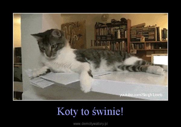 Koty to świnie! –