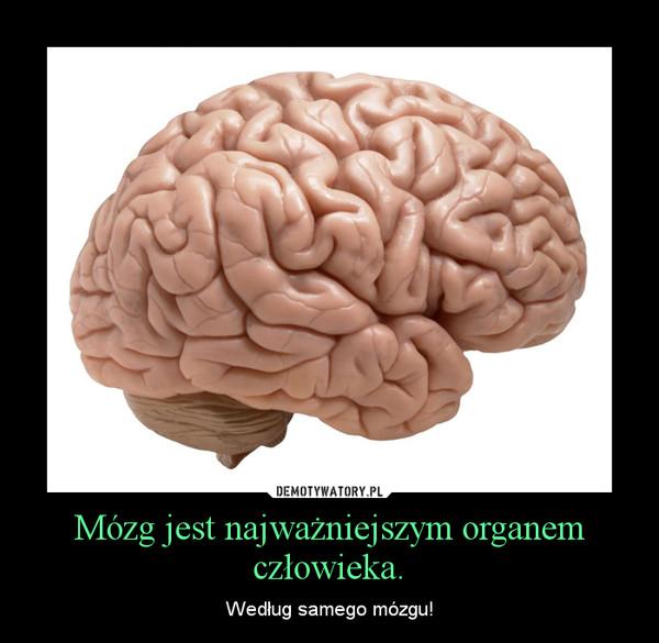 Mózg jest najważniejszym organem człowieka. – Według samego mózgu!