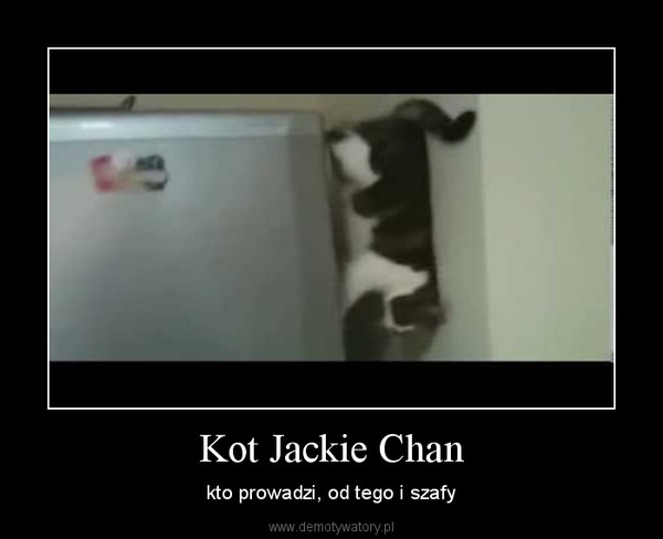 Kot Jackie Chan – kto prowadzi, od tego i szafy