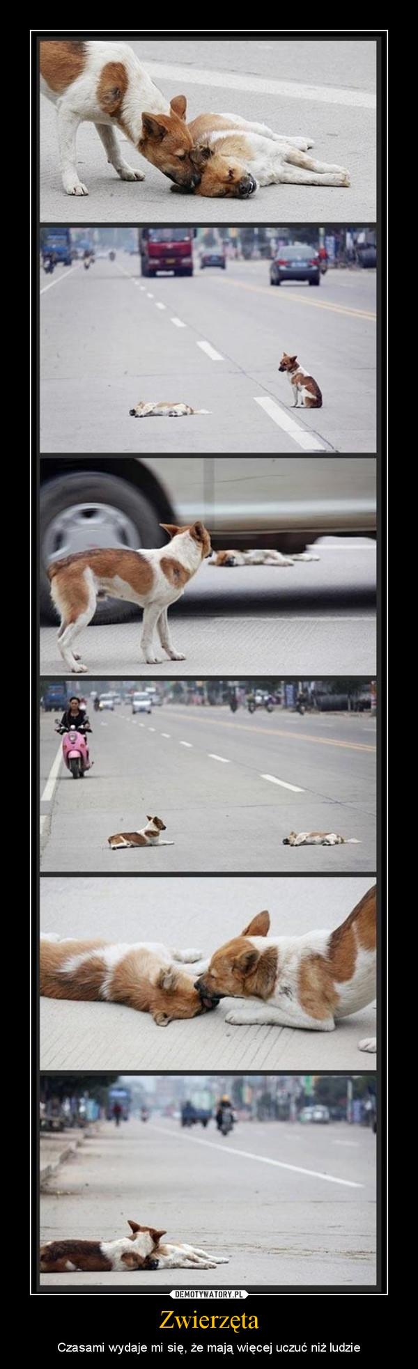 Zwierzęta – Czasami wydaje mi się, że mają więcej uczuć niż ludzie