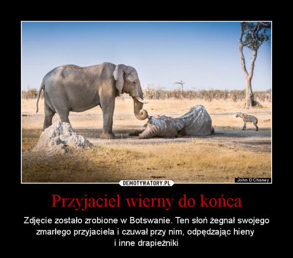 Przyjaciel wierny do końca – Zdjęcie zostało zrobione w Botswanie. Ten słoń żegnał swojego zmarłego przyjaciela i czuwał przy nim, odpędzając hieny i inne drapieżniki