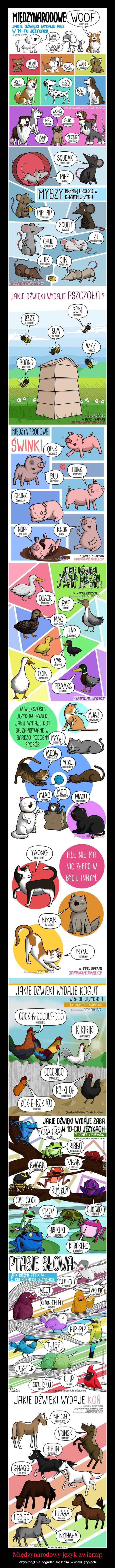 Międzynarodowy język zwierząt – Abyś mógł nie dogadać się z nimi w wielu językach