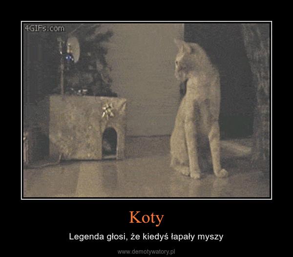 Koty – Legenda głosi, że kiedyś łapały myszy