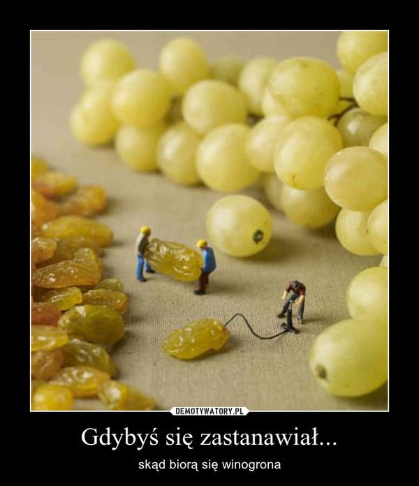 Gdybyś się zastanawiał... – skąd biorą się winogrona