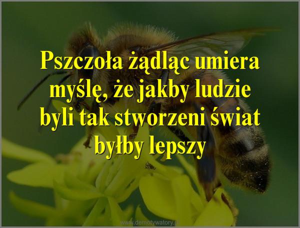 Pszczoła żądląc umiera myślę, że jakby ludzie byli tak stworzeni świat byłby lepszy –