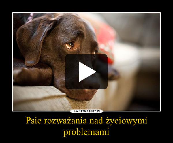 Psie rozważania nad życiowymi problemami –