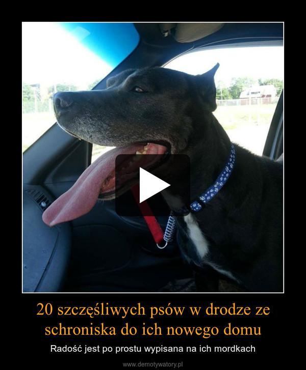 20 szczęśliwych psów w drodze ze schroniska do ich nowego domu – Radość jest po prostu wypisana na ich mordkach