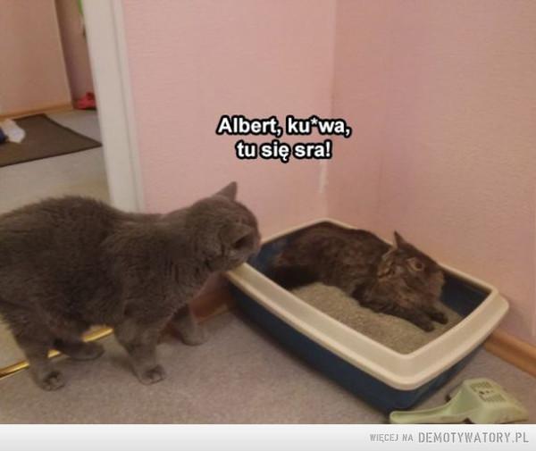 Albert, ogarnij się! –