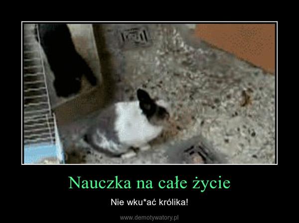 Nauczka na całe życie – Nie wku*ać królika!