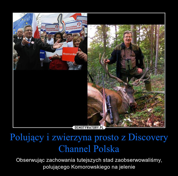 Polujący i zwierzyna prosto z Discovery Channel Polska – Obserwując zachowania tutejszych stad zaobserwowaliśmy, polującego Komorowskiego na jelenie