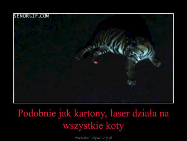 Podobnie jak kartony, laser działa na wszystkie koty –