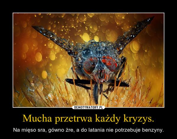 Mucha przetrwa każdy kryzys. – Na mięso sra, gówno żre, a do latania nie potrzebuje benzyny.