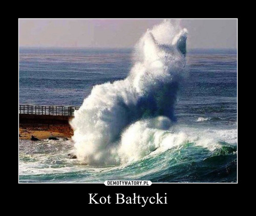 Kot Bałtycki