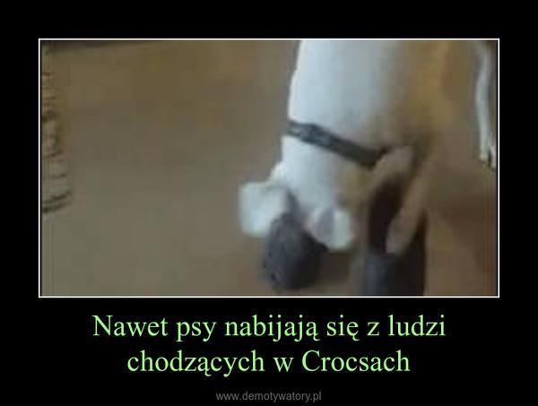 Nawet psy nabijają się z ludzi chodzących w Crocsach –