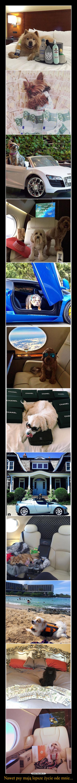 Nawet psy mają lepsze życie ode mnie... –