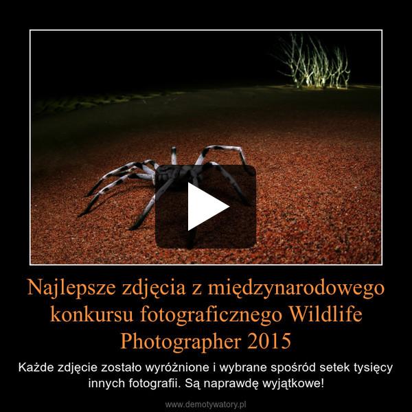 Najlepsze zdjęcia z międzynarodowego konkursu fotograficznego Wildlife Photographer 2015 – Każde zdjęcie zostało wyróżnione i wybrane spośród setek tysięcy innych fotografii. Są naprawdę wyjątkowe!