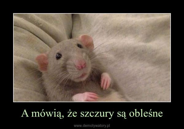 A mówią, że szczury są obleśne –