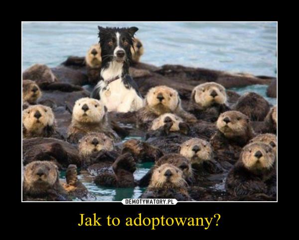 Jak to adoptowany? –