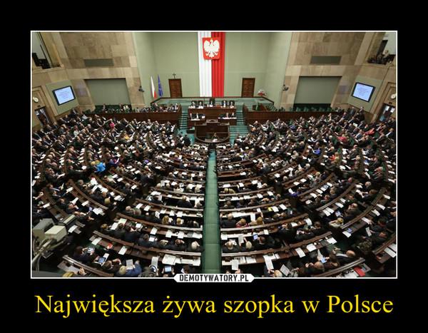Największa żywa szopka w Polsce –