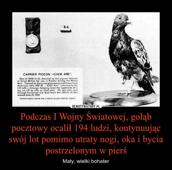 Podczas I Wojny Światowej, gołąb pocztowy ocalił 194 ludzi, kontynuując swój lot pomimo utraty nogi, oka i bycia postrzelonym w pierś – Mały, wielki bohater