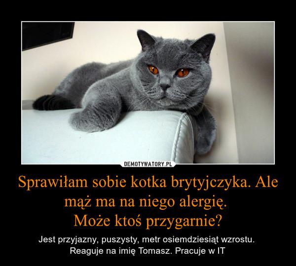 Sprawiłam sobie kotka brytyjczyka. Ale mąż ma na niego alergię. Może ktoś przygarnie? – Jest przyjazny, puszysty, metr osiemdziesiąt wzrostu. Reaguje na imię Tomasz. Pracuje w IT