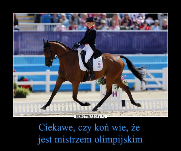 Ciekawe, czy koń wie, że jest mistrzem olimpijskim –