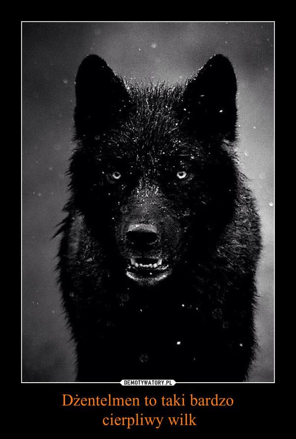 Dżentelmen to taki bardzo cierpliwy wilk –