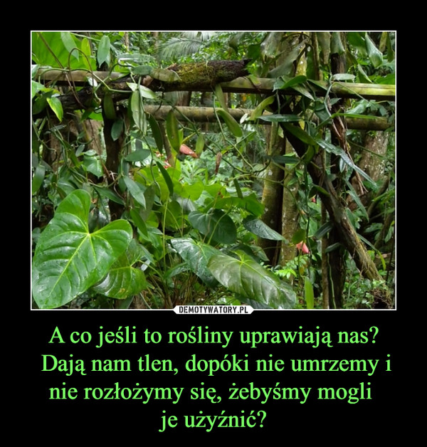 A co jeśli to rośliny uprawiają nas? Dają nam tlen, dopóki nie umrzemy i nie rozłożymy się, żebyśmy mogli je użyźnić? –