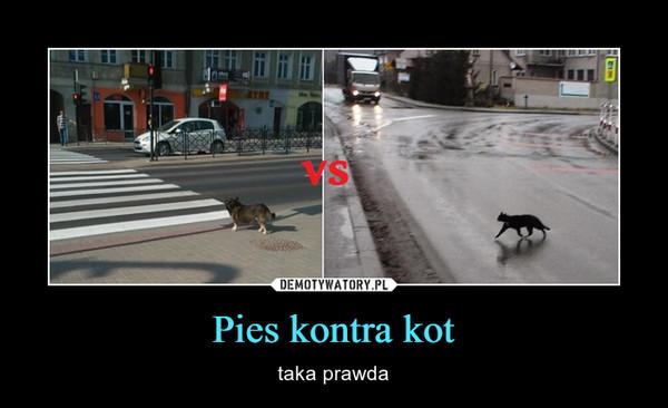 Pies kontra kot – taka prawda
