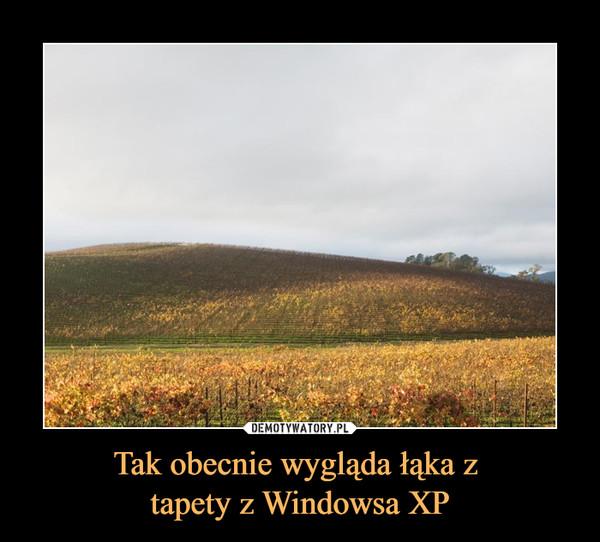 Tak obecnie wygląda łąka z tapety z Windowsa XP –