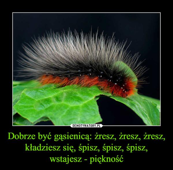 Dobrze być gąsienicą: żresz, żresz, żresz, kładziesz się, śpisz, śpisz, śpisz, wstajesz - piękność –