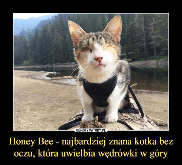 Honey Bee - najbardziej znana kotka bez oczu, która uwielbia wędrówki w góry –