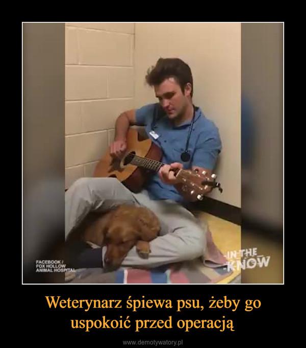Weterynarz śpiewa psu, żeby go uspokoić przed operacją –