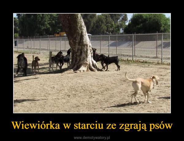 Wiewiórka w starciu ze zgrają psów –