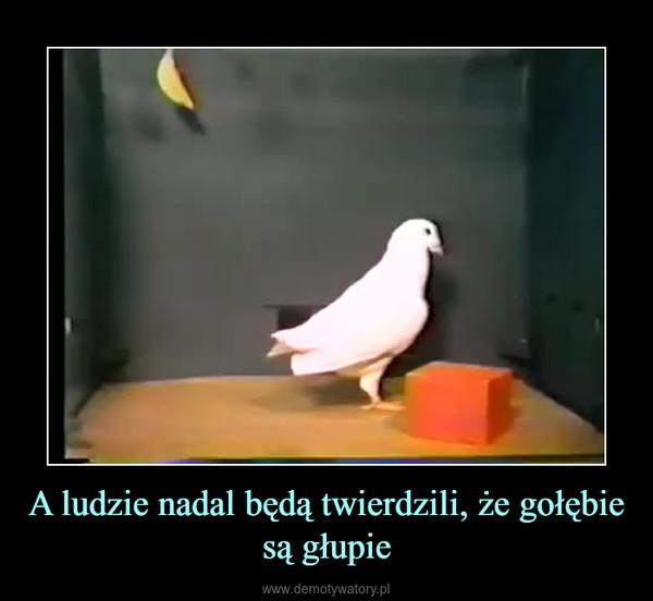 A ludzie nadal będą twierdzili, że gołębie są głupie –