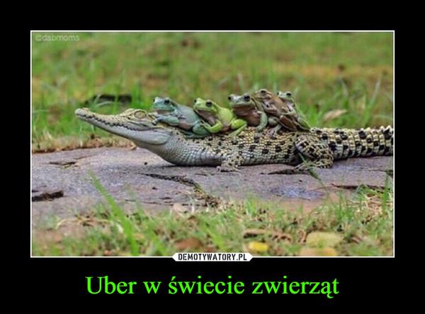 Uber w świecie zwierząt –