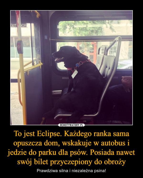 To jest Eclipse. Każdego ranka sama opuszcza dom, wskakuje w autobus i jedzie do parku dla psów. Posiada nawet swój bilet przyczepiony do obroży – Prawdziwa silna i niezależna psina!