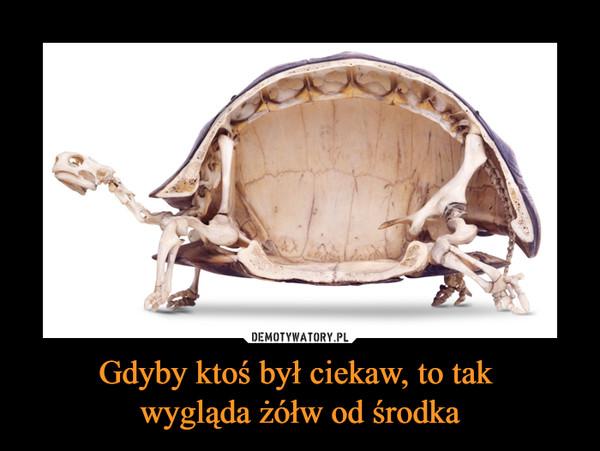 Gdyby ktoś był ciekaw, to tak wygląda żółw od środka –